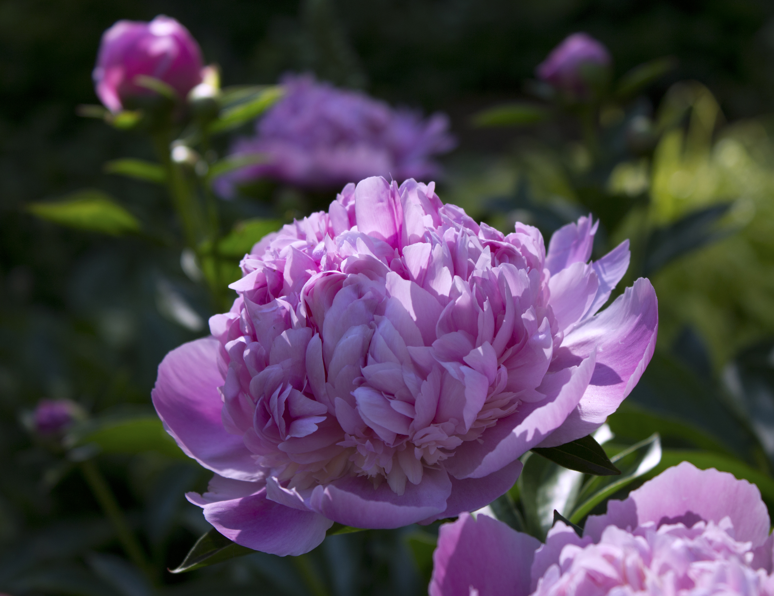 Plant Some Springtime Fragrance - Osmocote® Plant Food 2017-06-22 15:00
