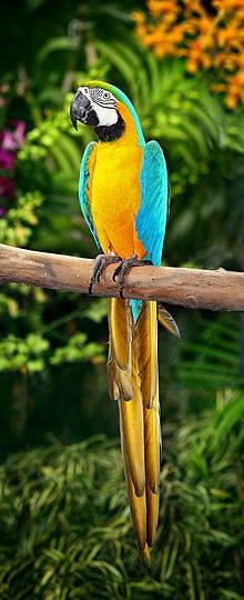 Costa Rica Ecotourism Nature Packages. Come have a wild trip