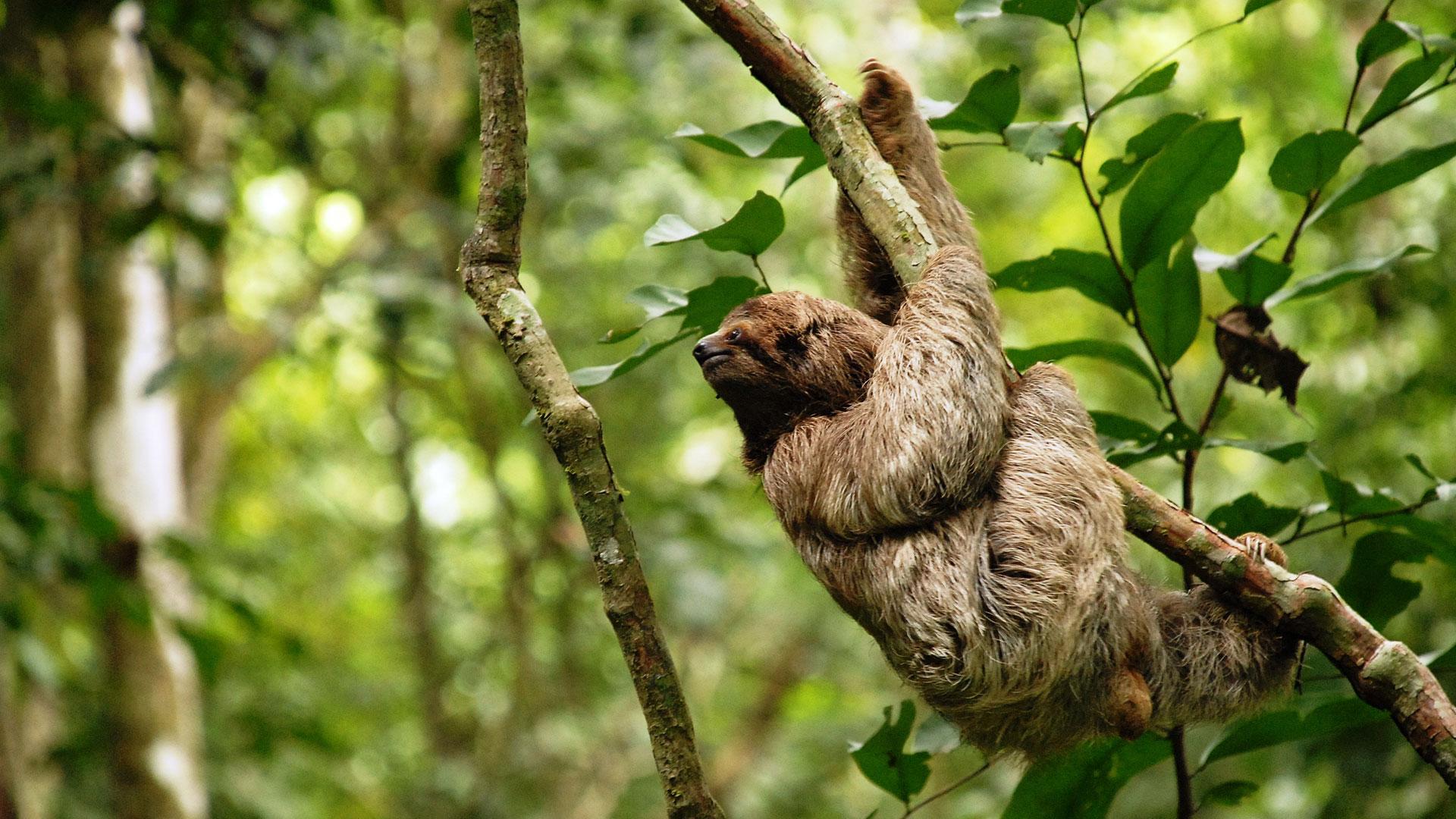 Top Ten Reasons to visit Costa Rica - CostaRica.org